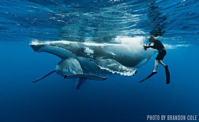 צילום תת-מימי כספורט תחרותי